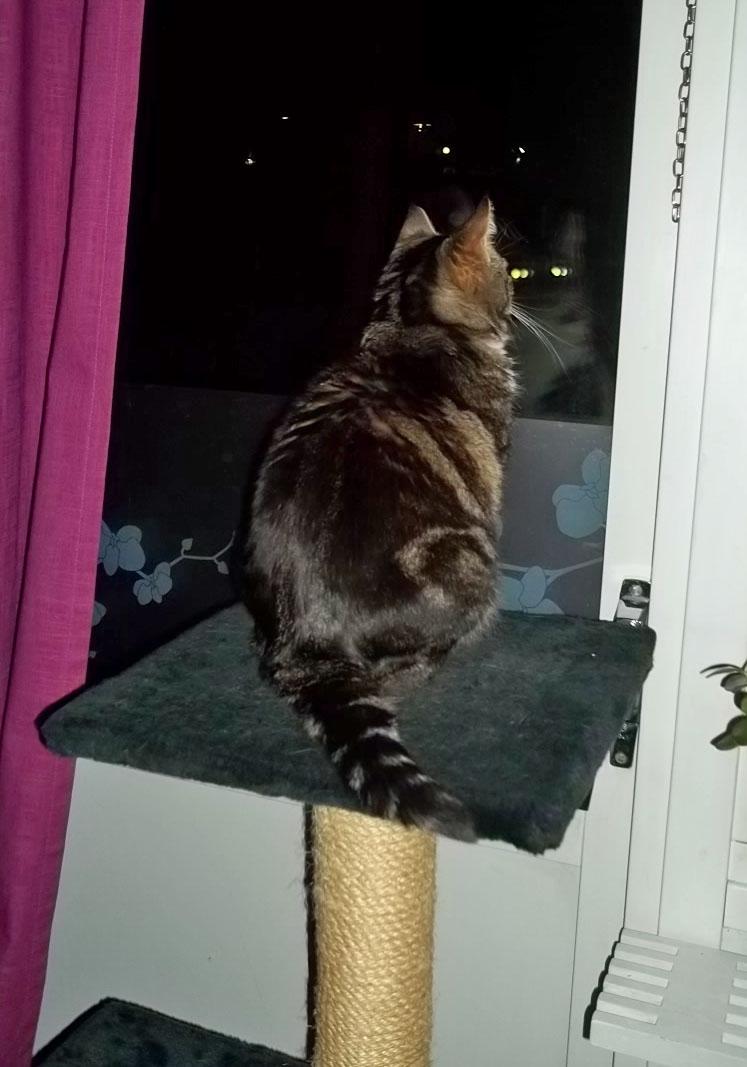 3. Kitty var mycket nyfiken och ville ut och ta reda på vad som pangade, eller om hon ville fånga glittret som föll från himlen.JPG