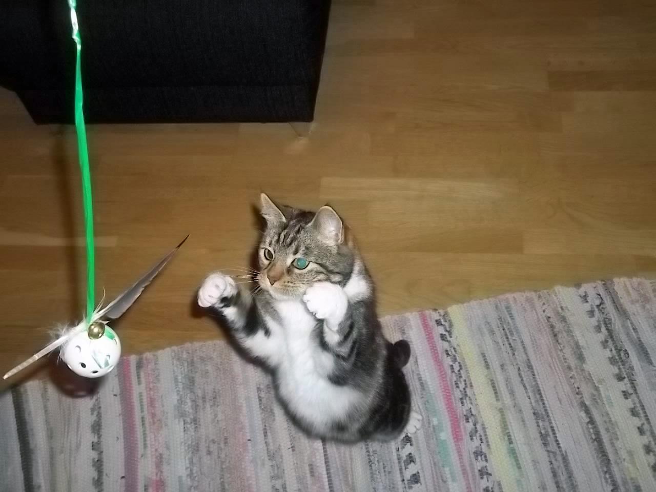 Kitty går till attack!
